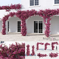 Bougainvillea Collection (+GrowFX)