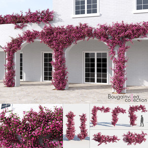 3D bougainvillea plants suspended model