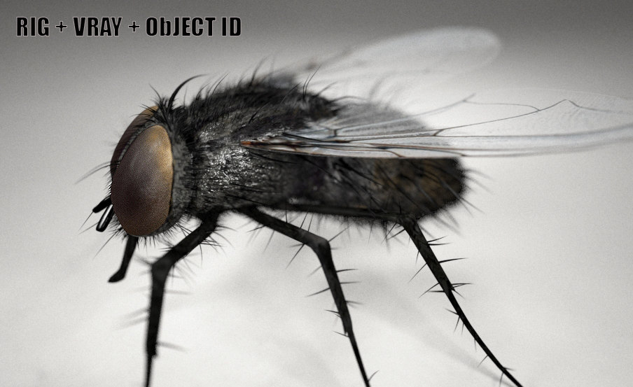 realistic fly 3D model