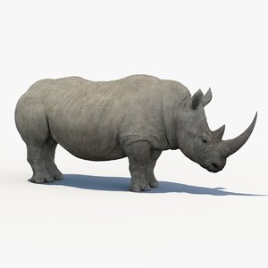 white rhinoceros 3D model