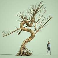 3D dead forest tree stylised model