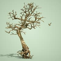 dead forest tree stylised 3D model