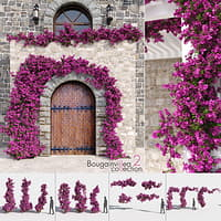 Bougainvillea Collection 2 (+GrowFX)