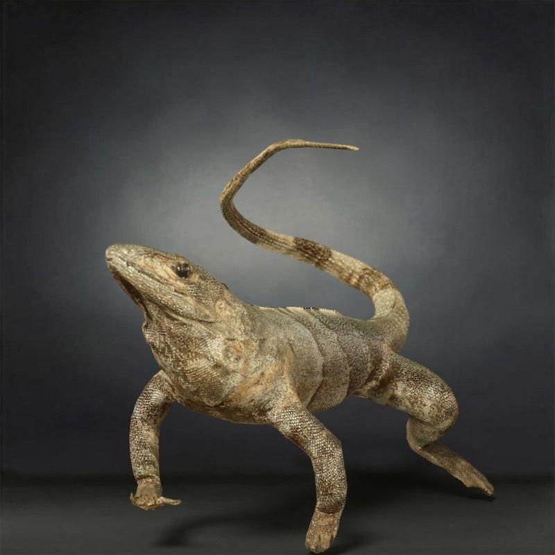animal digital photogrammetry 3D model