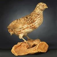 3D animal digital photogrammetry model