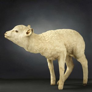animal digital photogrammetry 3D model