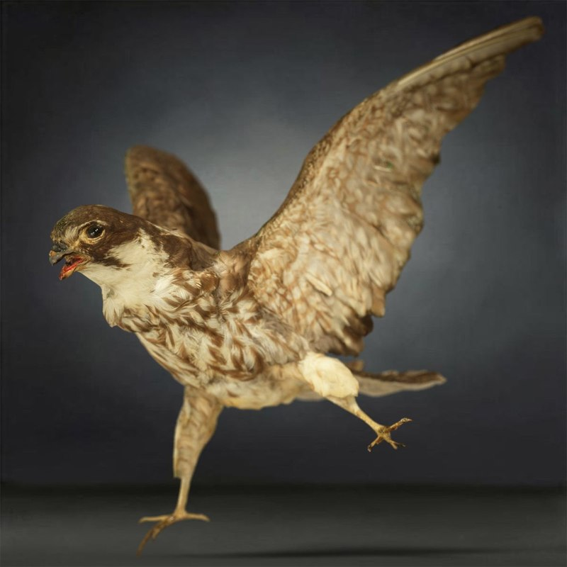 3D animal digital photogrammetry