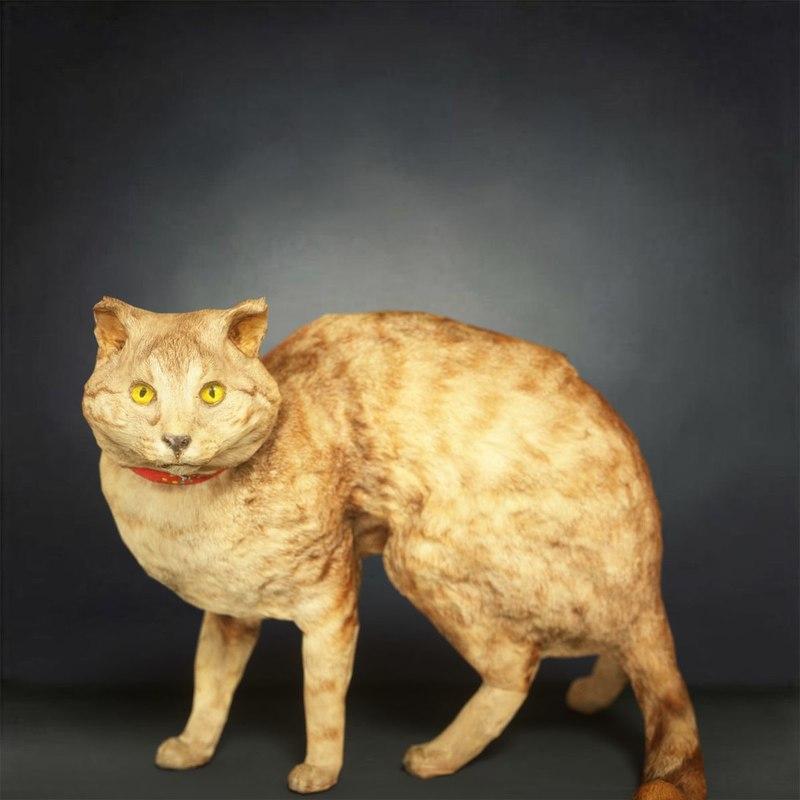 3D model animal digital photogrammetry