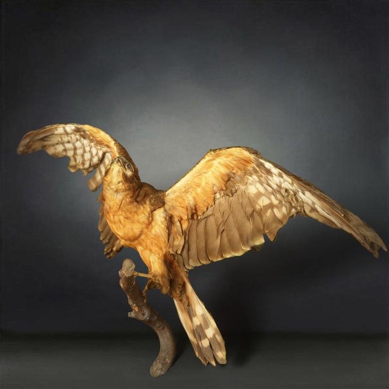 animal digital photogrammetry 3D