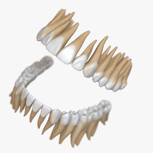 3D model dentition stylized teeth