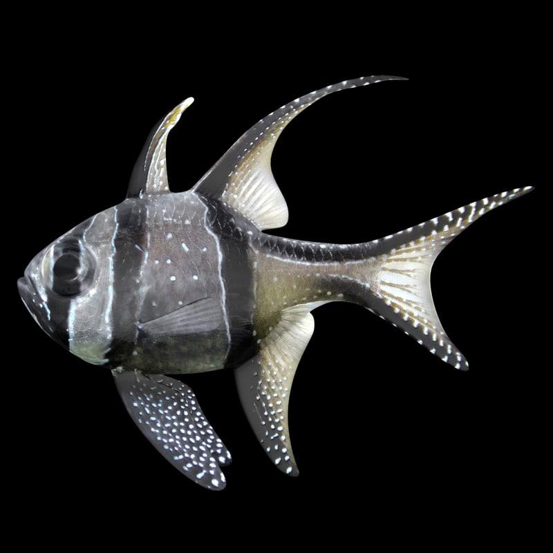 banggai cardinalfish scanline 3D model