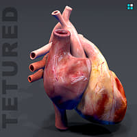 heart realistic animation 3D