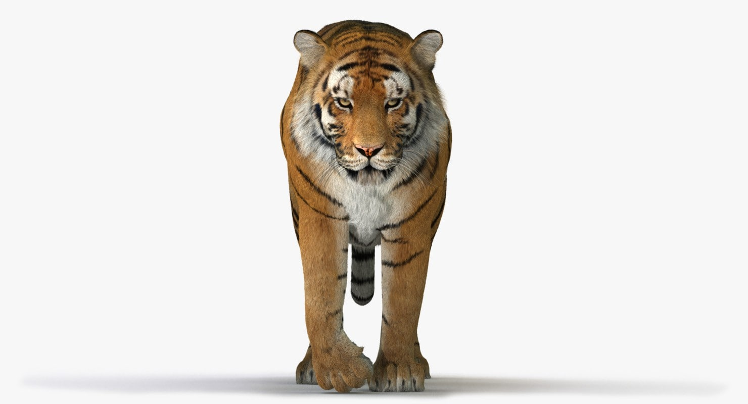 Tiger (4) (Animated) (Fur)
