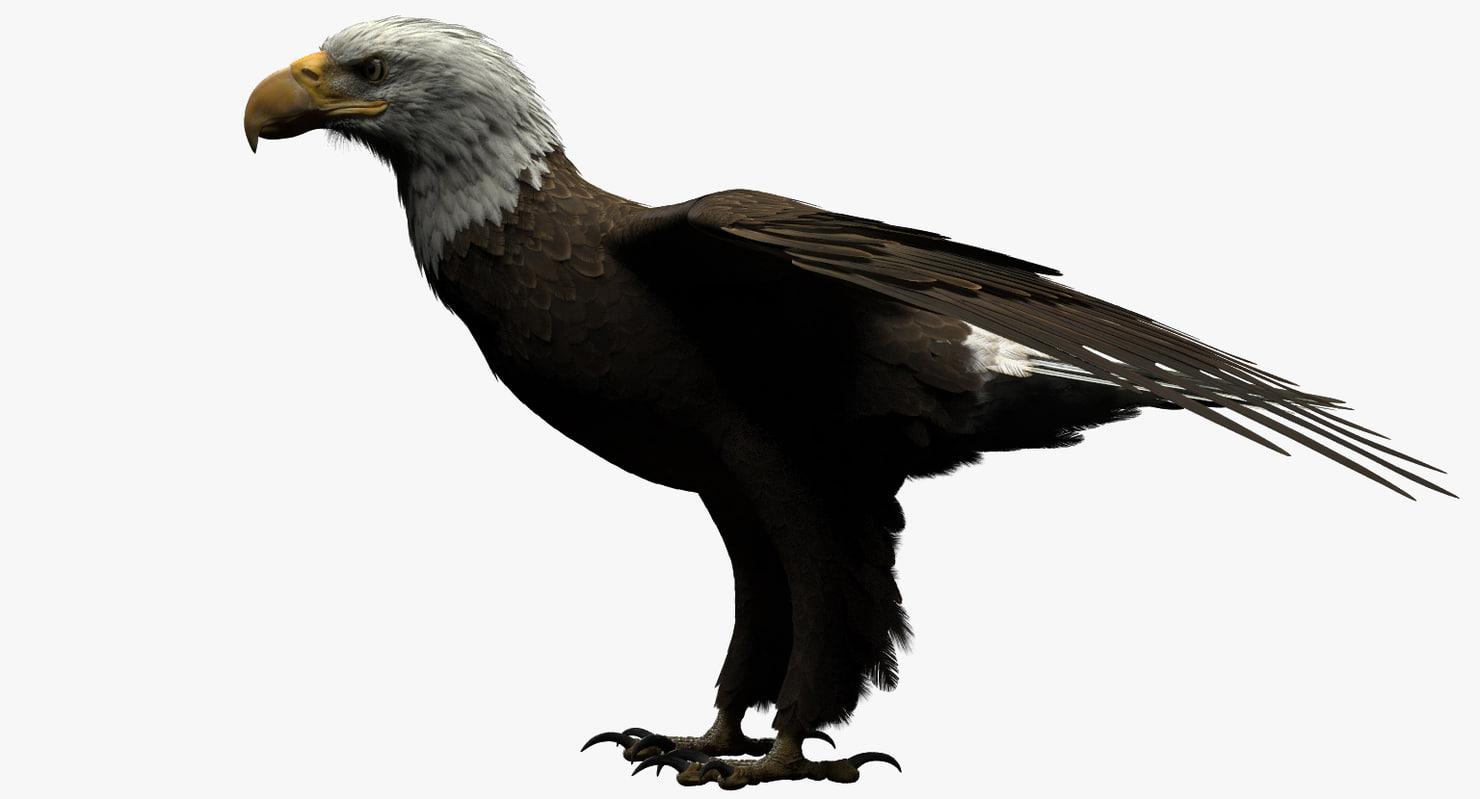 how to make a bald eagle model