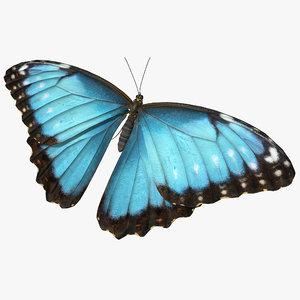 butterfly morpho peleides 3D model