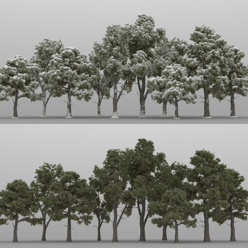 3D 10 pine trees model
