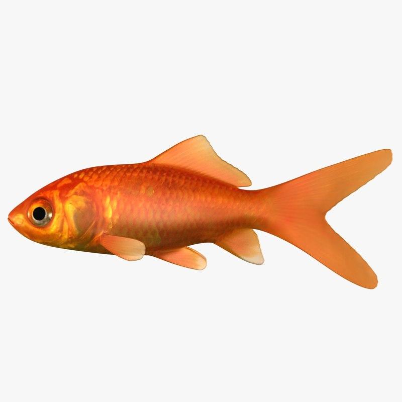 goldfish scanline model