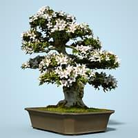3D model satsuki bonsai tree blossom