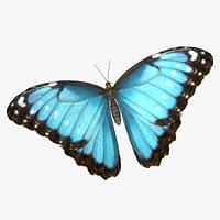 3D emperor butterfly