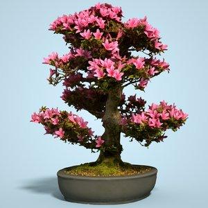 satsuki bonsai tree blossom 3D