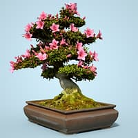satsuki bonsai tree blossom 3D model