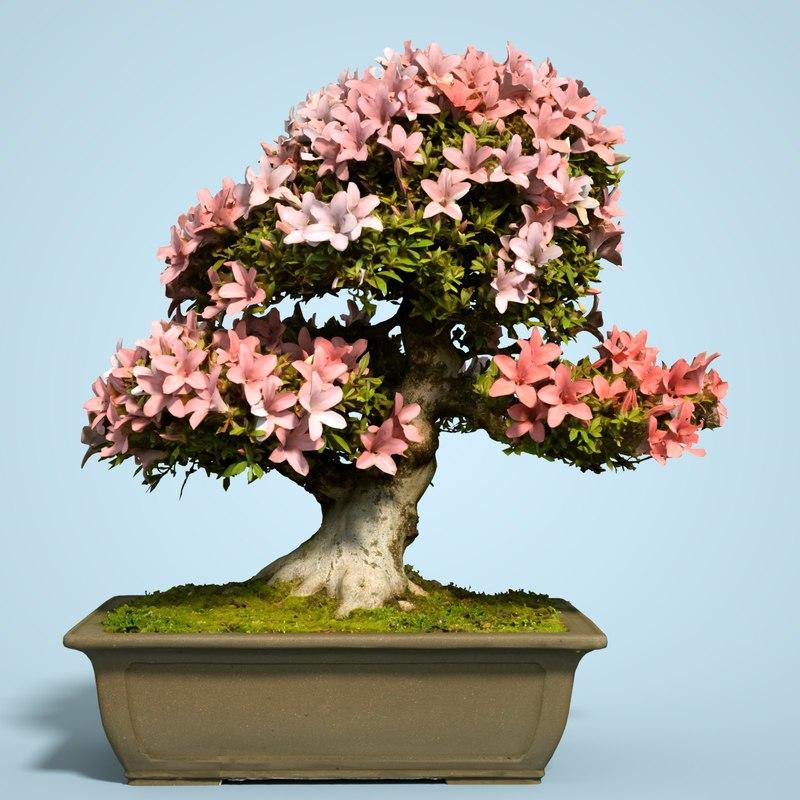 3D satsuki bonsai tree blossom model