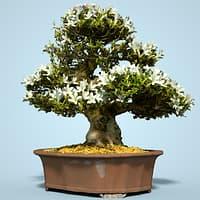 3D satsuki bonsai tree blossom