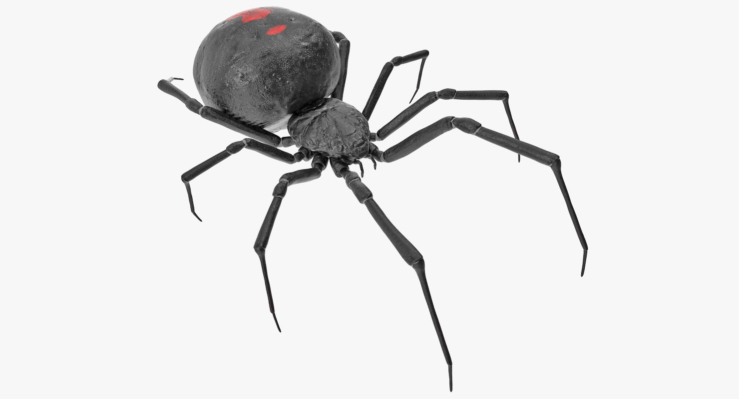 3D model latrodectus spider