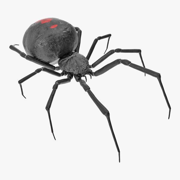 3D model latrodectus spider
