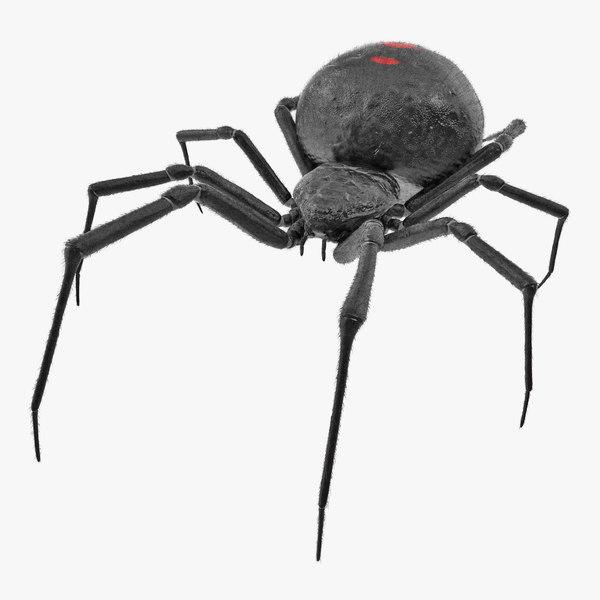 3D latrodectus spider fur