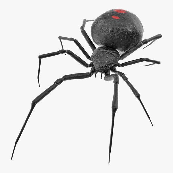 3D widow spider model