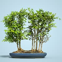 3D bonsai forest