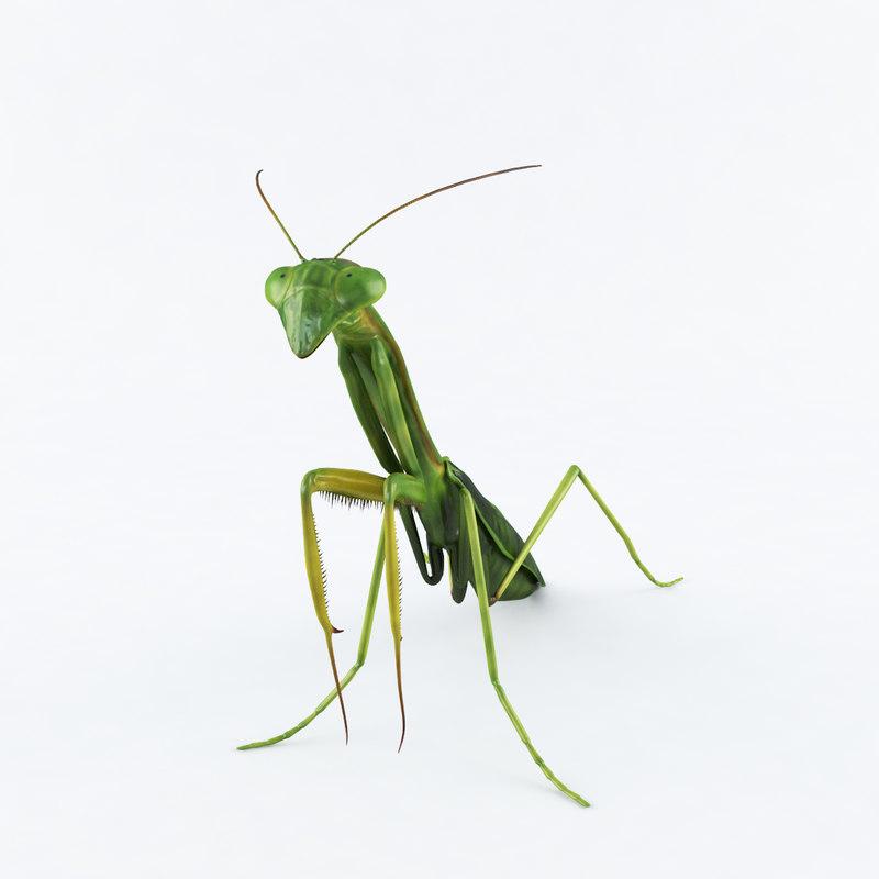 realistic mantis 3D model