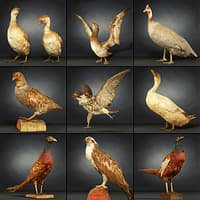 9 Birds Collection 1
