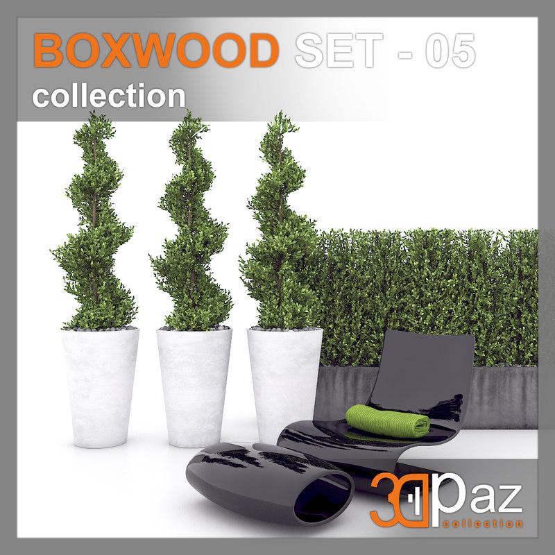 boxwood model