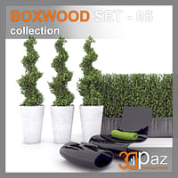 boxwood model
