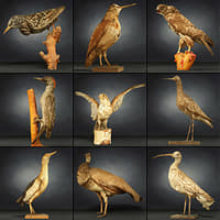 9 Birds Collection 3