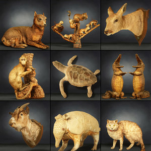 animal 9 3D model