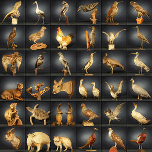 animal digital photogrammetry 3D