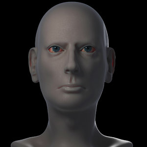 male head based 3D model