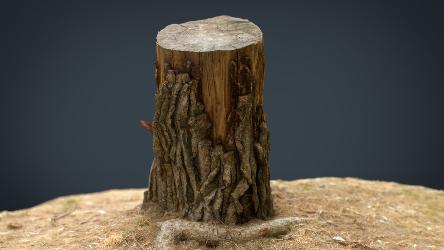 3D realistic tree stump