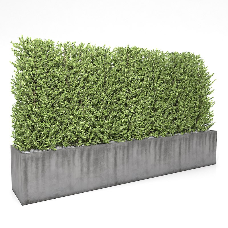 3D - boxwood fence