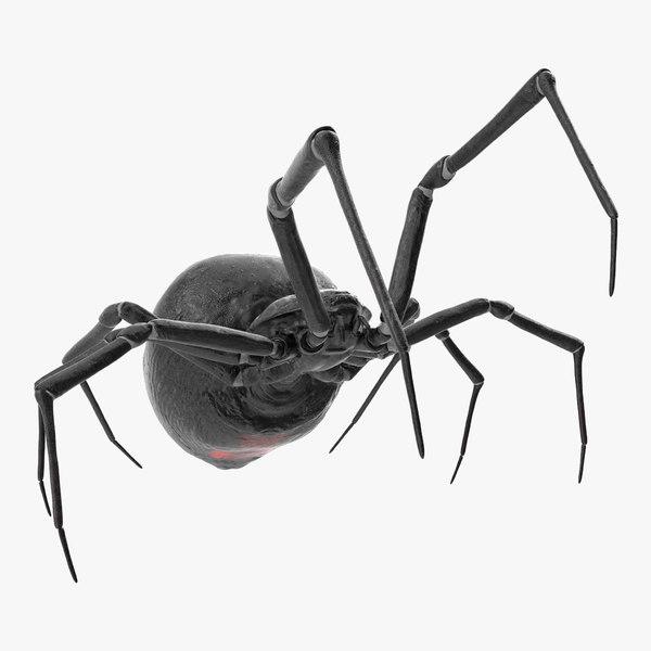 widow spider fighting pose 3D model