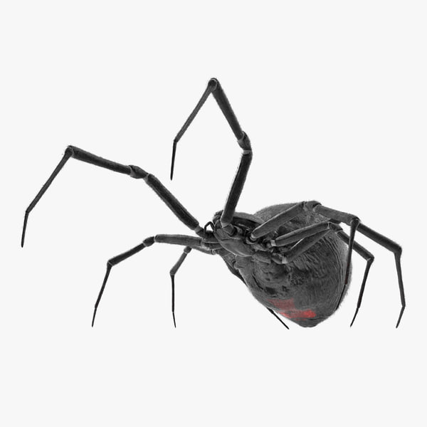 3D widow spider fighting pose model