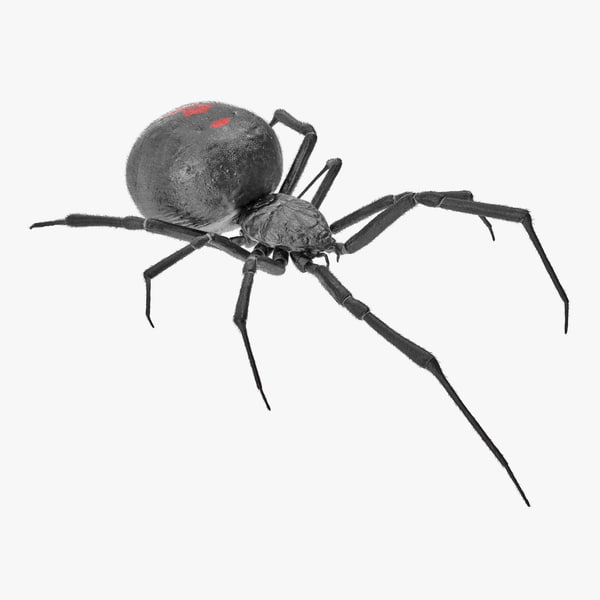widow spider fur 3D