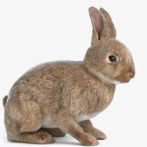 3D model rabbit