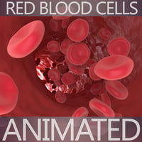 3D blood cells model
