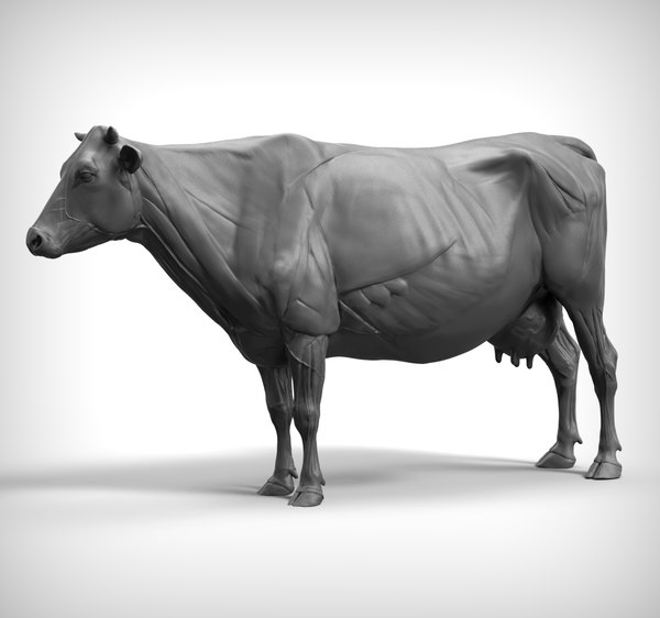 3D cow anatomy structure model