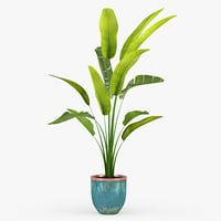 3D palm banana model