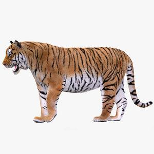 tiger rigged 1 fur 3D
